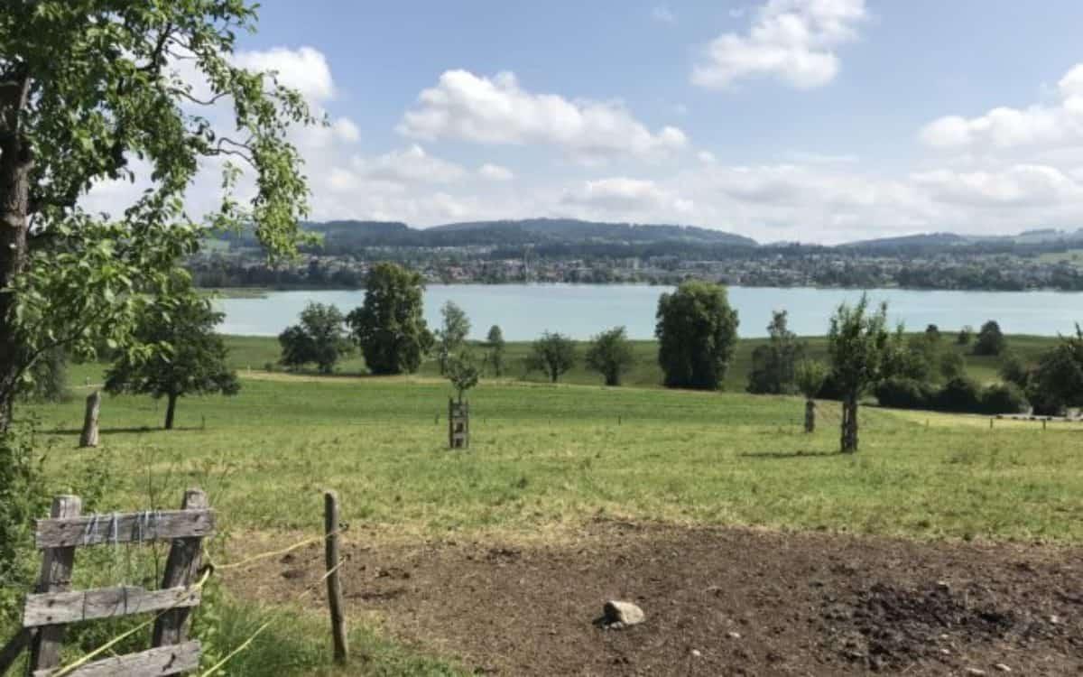Blick auf den Päffiker See