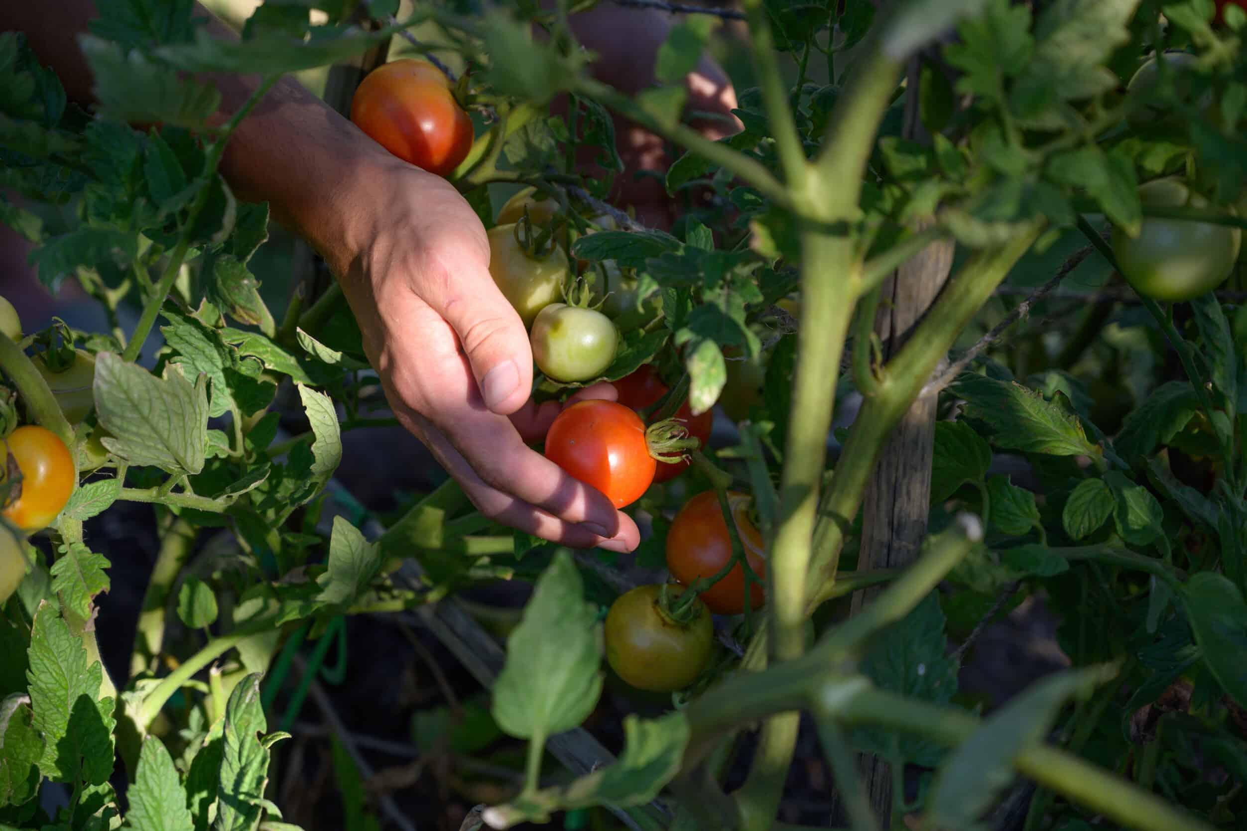 Thermomix_Twens_Gardening_366_medium (1)